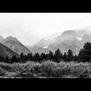 Product-Mountain Mist